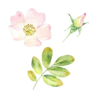 水彩ピンクのローズヒップの花のセット