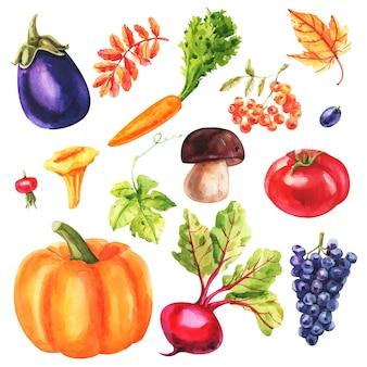 白い背景の上の水彩野菜のセット