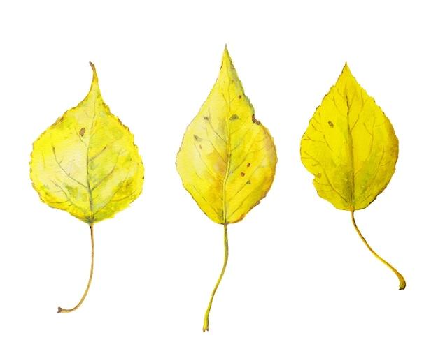 Набор акварельных желтых осенних листьев. сезонная иллюстрация