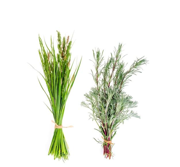 Комплект одичалой зеленой травы на белизне.