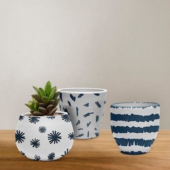 Set of pots in white and blue with a succulent