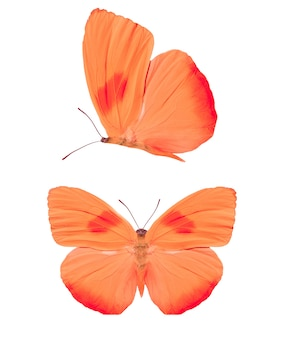 Set of red butterflies isolated on a white background. high quality photo