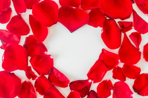 Set di petali di fiori rossi