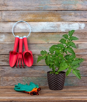 Set of red plastic garden tools, green protective gloves seedling tomato in a pot on wood