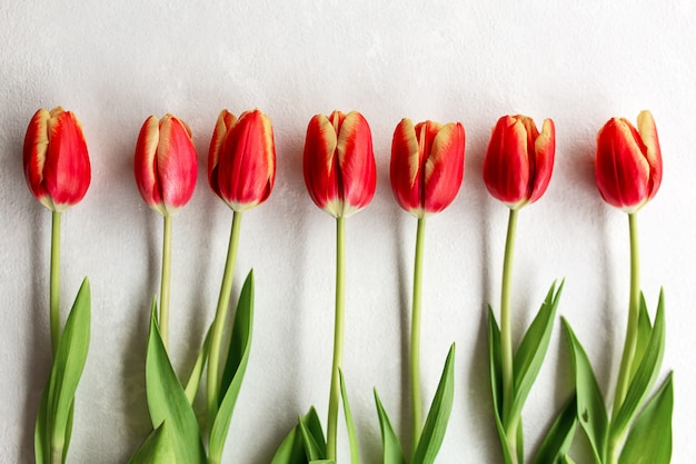 Set of red and yellow tulips