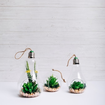 Set of succulent plant inside glass hanging light bulb on white desk