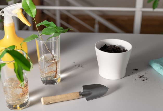 Set of tools for planting houseplant in white pot