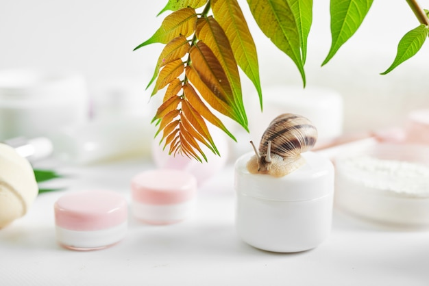 Set of traditional spa products and snail