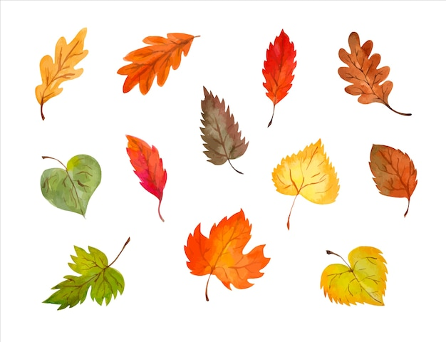 Set of vector colorful autumn leaves