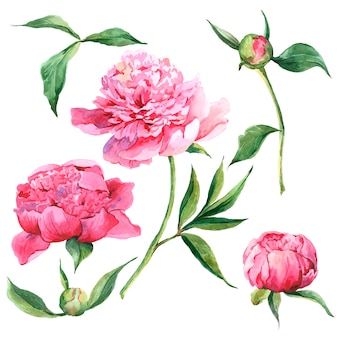 Set of watercolor floral design elements.