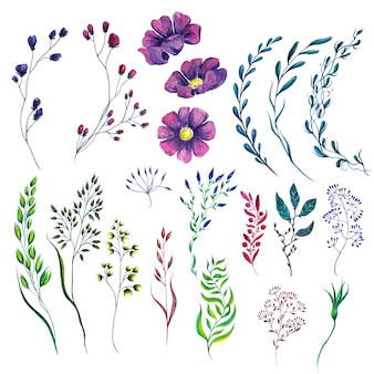 Set of watercolor flower plants