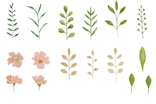 Set of watercolor herbarium elements pink flowers and leaf. summer and spring seasons.