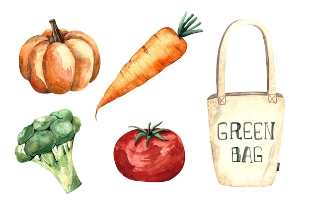 Set of watercolor illustration with vegetables, tomato, pumpkin, carrot, broccoli, shopping bag, isolated illustration on white background