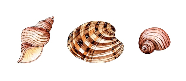 Set of watercolor illustrations of beautiful seashells in beige and brown colors underwater world