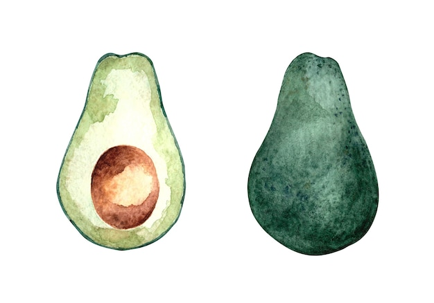 Set of watercolor illustrations with avocado on a white isolated background