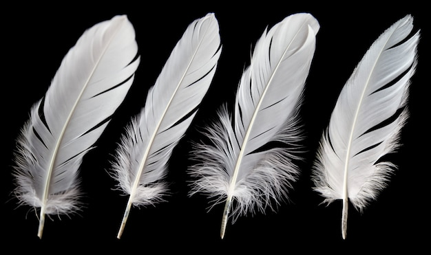 Set of white feathers isolated on black background.