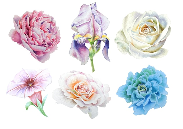 鮮やかな花がセット。虹彩。ローズ。牡丹。手で書いた。水彩イラスト。
