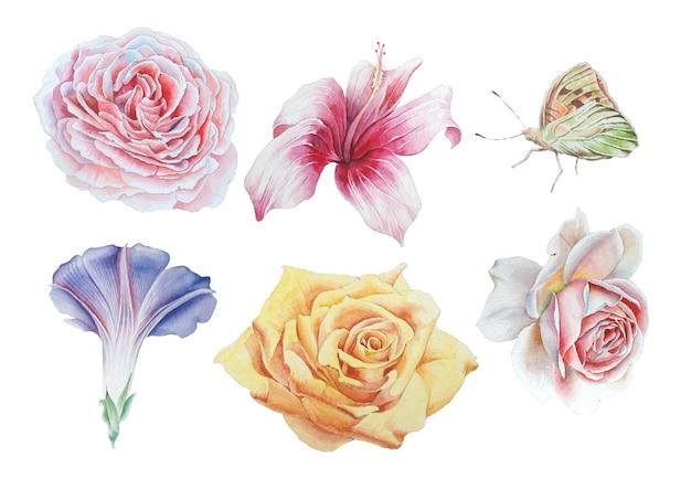 밝은 꽃으로 설정합니다. 장미. 나비. 히비스커스. 수채화 그림. 손으로 그린.