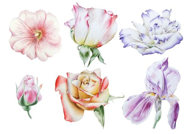 鮮やかな花がセット。ローズ。虹彩。トルコギキョウ。ゼニアオイ。水彩イラスト。手で書いた。