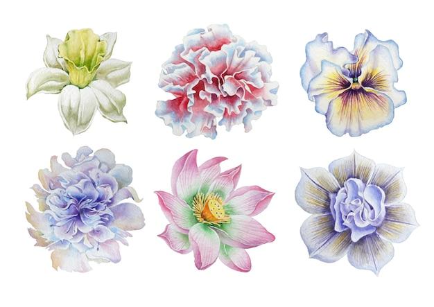 花をセット。パンジー。水仙。マリーゴールド。牡丹。ロータス。水彩イラスト。手で書いた。