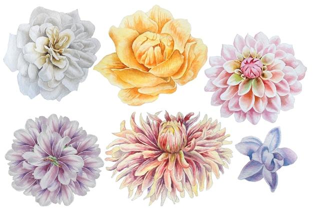 꽃으로 설정합니다. 장미. 모란. 달리아. 수채화 그림. 손으로 그린.
