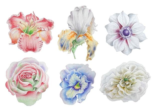 花をセット。ローズ。牡丹。リリー。虹彩。アネモネ。パンジー。水彩イラスト。手で書いた。