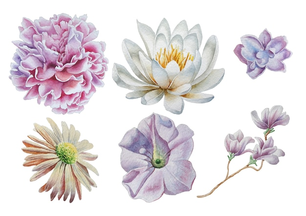 꽃으로 설정합니다. 장미. 모란. 백합. 수채화 그림. 손으로 그린.