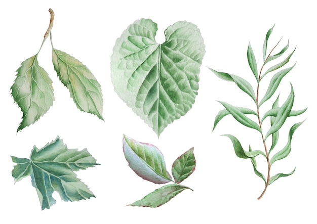 Set with leaves. watercolor illustration. hand drawn.