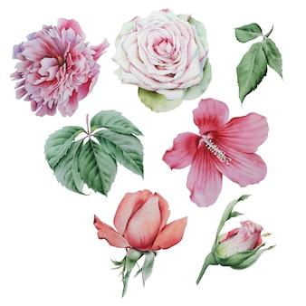 水彩画の花と葉で設定します。ローズ。牡丹。ハイビスカス。葉っぱ。手で書いた。