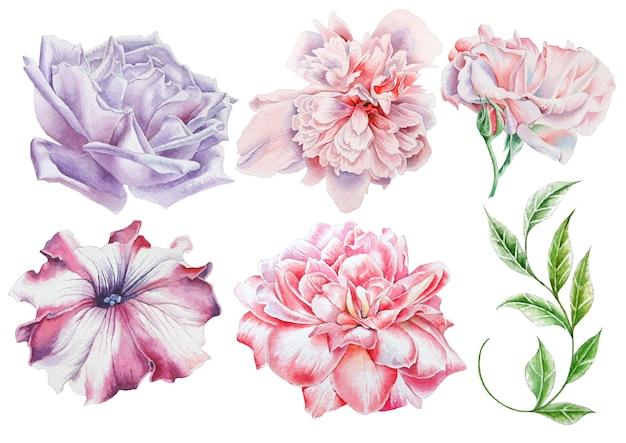 수채화 꽃으로 설정합니다. 장미. 모란. 피튜니아. 이파리. 손으로 그린.