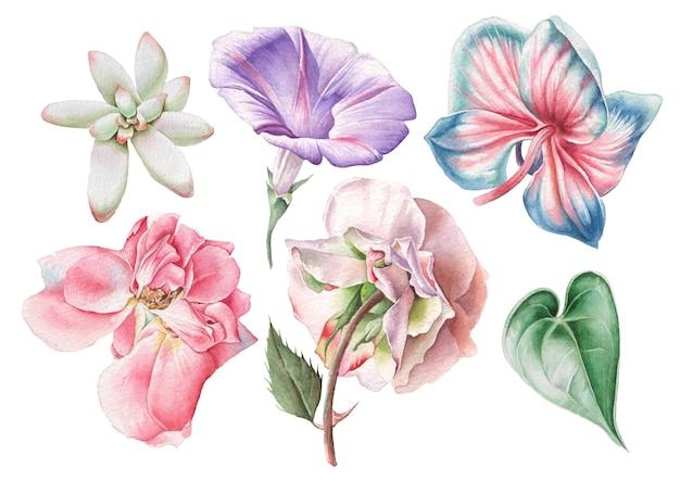 수채화 꽃으로 설정합니다. 장미. 피튜니아. 난초. 흥미 진진한. 손으로 그린.