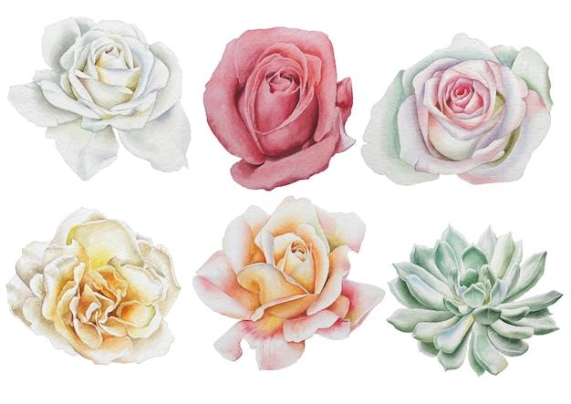 수채화 꽃으로 설정합니다. 장미. 다육 식물. 손으로 그린.