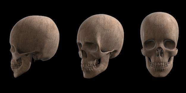 Set of wooden skull