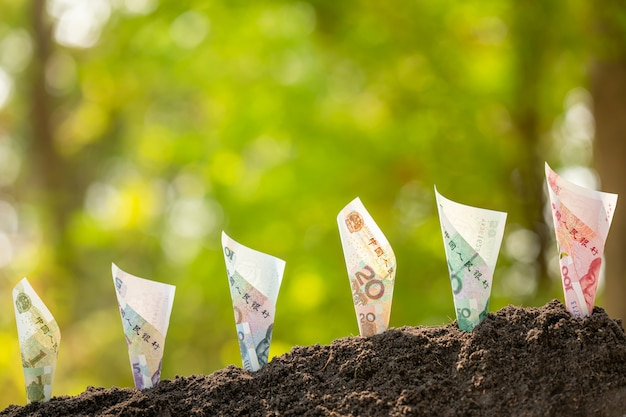 Several chinese banknote (1-100 yuan) growing in soil with green nature blur background. business grow up concept