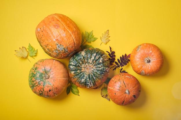 秋の黄色の葉、黄色の背景の上面図にいくつかの異なるカボチャ