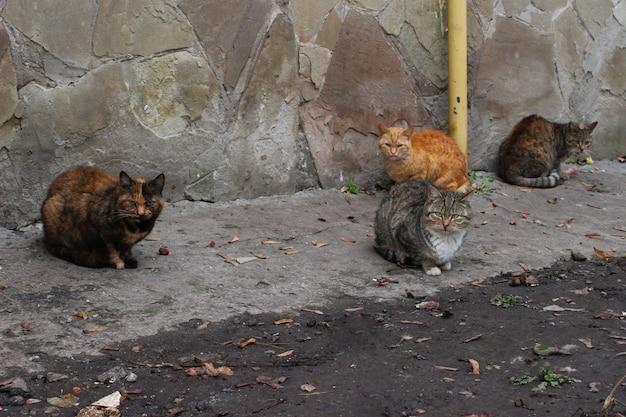 집없는 고양이 몇 마리