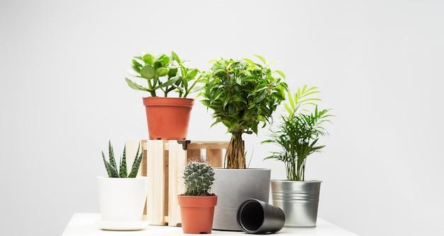 여러 실내 식물, 빈 고립 된 회색 배경에 냄비에 선인장