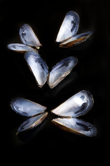 Several open mussel shells on black background