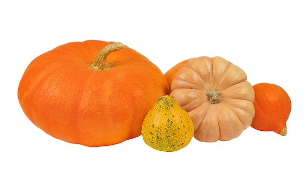 Several pumpkins isolated on white background
