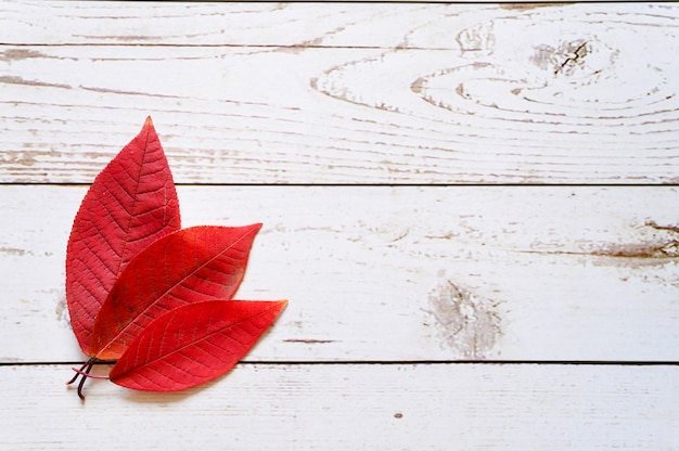 Several red autumn fallen leaves on a light wooden boards background. flat lay. space for text
