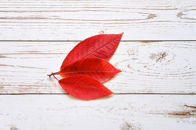Several red autumn fallen leaves on a light wooden boards. flat lay