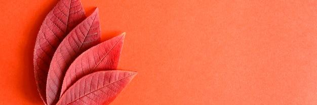 赤い紙の背景にいくつかの赤い落ちた秋の桜の葉が平らに横たわっていた。バナー
