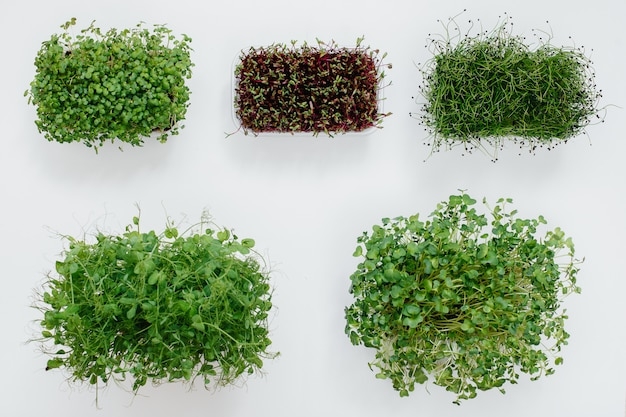 いくつかのsudochkiは白い表面にマイクログリーンのクローズアップを芽します。健康的な食事とライフスタイル。