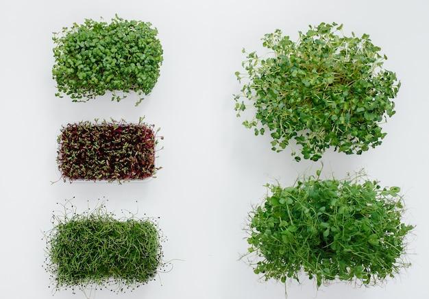 いくつかのsudochkiは白いテーブルにマイクログリーンを芽します。健康的な食事とライフスタイル。
