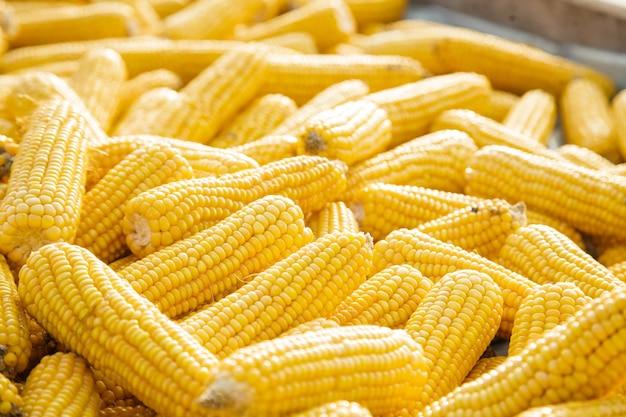 Несколько початков сладкой кукурузы