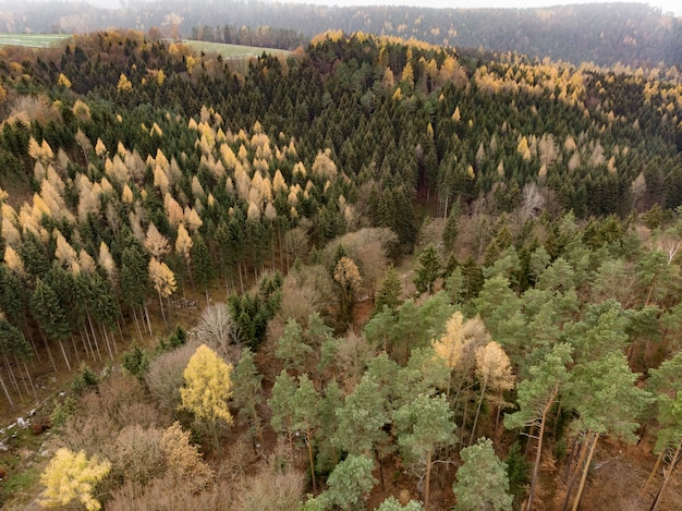 Several trees of multiple shades growing on a mountain