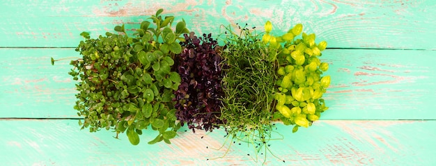 Several types of microgreens on a wooden background. microgreens of different varieties on a wooden background.