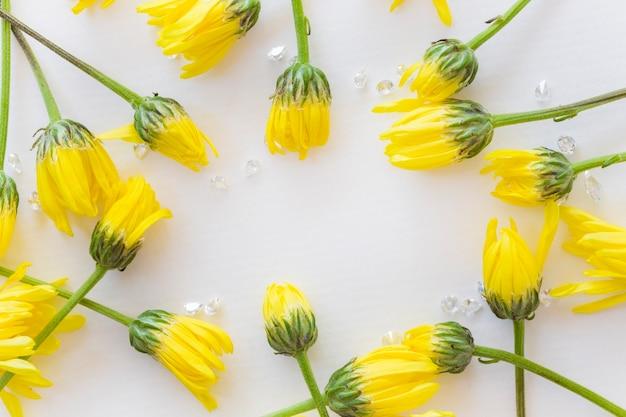 여러 개의 노란색 국화 꽃이 여유 공간이 있는 흰색 배경에 배치됩니다.