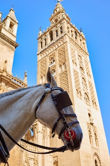 Seville cathedral giralda tower with horse