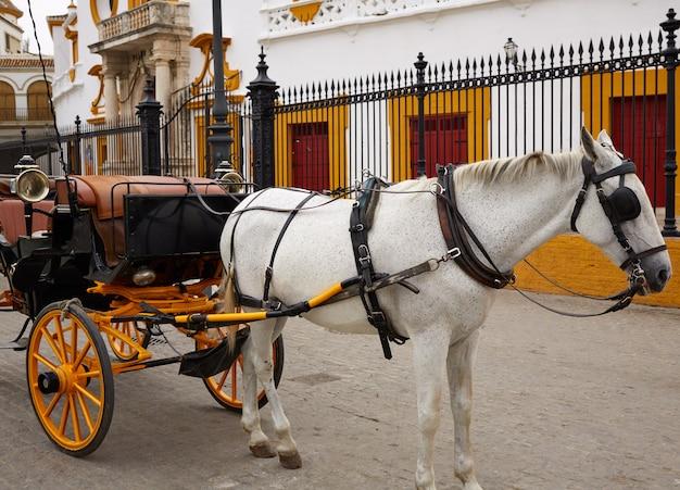 Севилья реал маэстранса арена для боя быков плаза торос